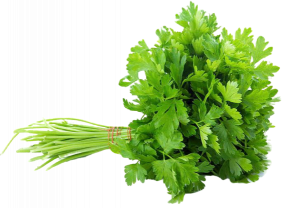 imgbin-celery-vegetable-parsley-coriander-herb-vegetable-bunch-of-parsley-Vd1U84ADSeYdPp5NHBAA4SvVK-removebg-preview